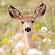 Mule Deer Fawn Lying In Wildflowers Art Print