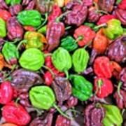 Multi Mini Hot Pepper Variety Art Print