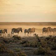 Namibia, Etosha National Park, Herd Art Print