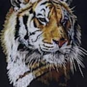 Nanook the Tiger Art Print