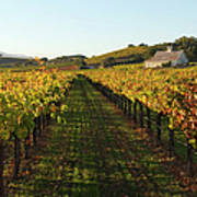 Napa Valley Vineyard In Autumn Art Print