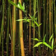 New Bamboo Shoot Art Print