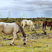 New Forest Ponies On The Heath Art Print