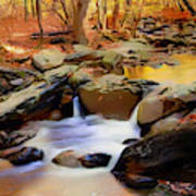 New Jersey Pines Art Print