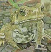 Noble Toad Art Print