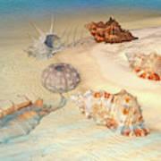 Ocean Shells Art Print