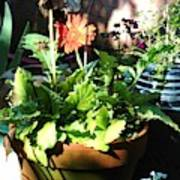 Old Pots New Blooms Art Print