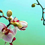 Orchids Out For A Breath Of Fresh Air Art Print