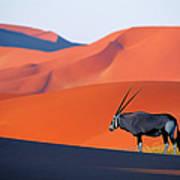 Oryx Antelope Art Print