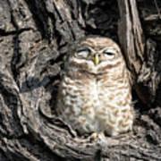 Owl In A Tree Art Print