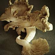 Oyster Mushrooms Still Life Art Print
