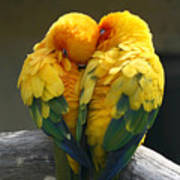Pair Lovebirds Art Print