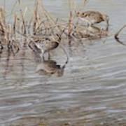 Pair Of Snipe By Alan M Hunt Art Print