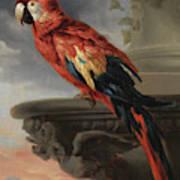 Parrot By Rubens Art Print