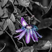 Passion Flower Only Alt Art Print