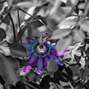 Passion Flower Only Art Print
