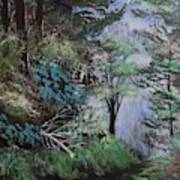 Path Thru The Woods Art Print