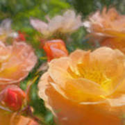 Peach Yellow Roses Art Print