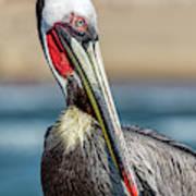 Pelican Pose Art Print