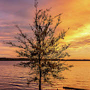 Percy Priest Lake Sunset Young Tree Art Print