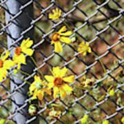 Phoenix Arizona Papago Park Blue Sky Red Rocks Scrub Vegetation Yellow Flowers 3182019 5327 Art Print