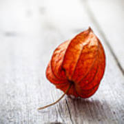 Physalis Alkekengi On Wood Art Print
