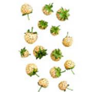 Pineberries Hybrid  Art Print