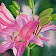 Pink Lily with Buds Art Print