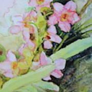 Pink Moth Orchids II Art Print