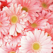 Pink Palette Art Print