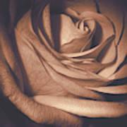 Pink Rose Petals 0219 Art Print