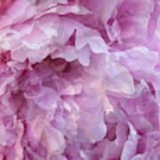 Pinkity Art Print