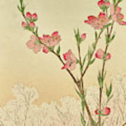 Plum Or Cherry Blossom Art Print