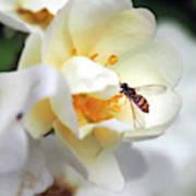 Pollinating 3 Art Print