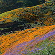 Poppies Bluebells And Rolling Hills Art Print