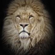 Portrait Of Lion Against Black Art Print