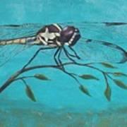 Praying Dragonfly Art Print
