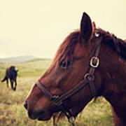 Profile Of Brown Horse In Meadow Art Print