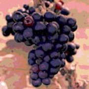 Purple Grape Bunches 18 Art Print