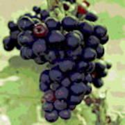 Purple Grape Bunches 19 Art Print