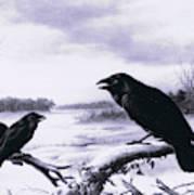 Ravens In Winter Art Print