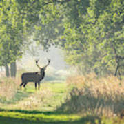 Red Deer In The Forest Art Print