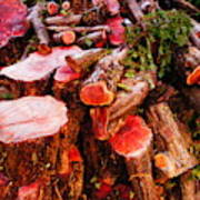 Red Logs Art Print