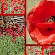 Red Poppy Art Print