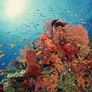 Reef Scenic Of Hard Corals , Soft Art Print