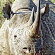 Rhino Zen Art Print
