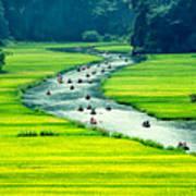 Rice Field And River, Ninhbinh, Vietnam Art Print