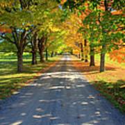 Road Among The Trees 1 Art Print