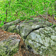 Rock On Green's Hill Art Print