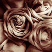 Rose Carmine Art Print